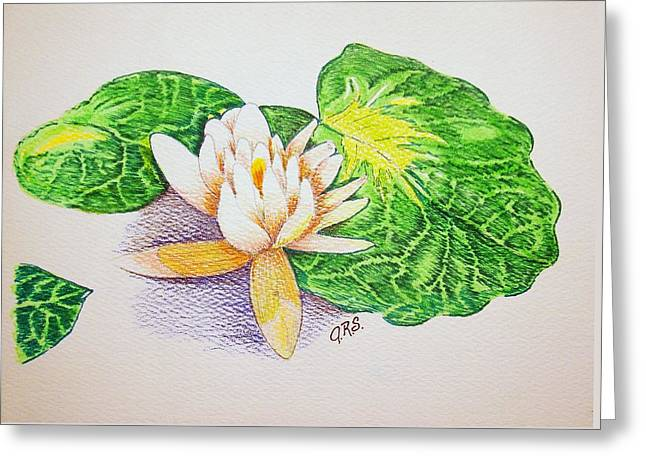 Lily Pad Greeting Card by J R Seymour