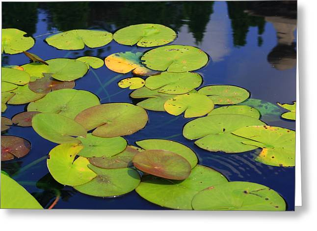 Lily Pads Greeting Card by Allison Whitener