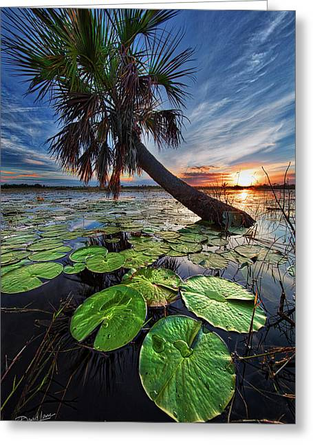 Lily Pads And Sunset Greeting Card