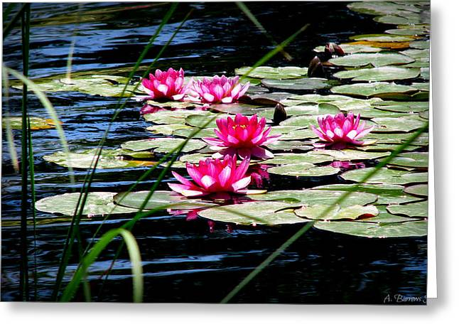 Lily Pads And Wildflowers Greeting Card