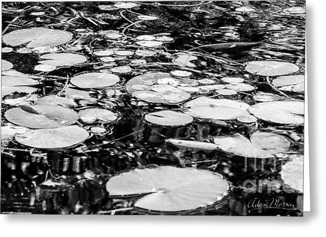 Lily Pads, Black And White Greeting Card