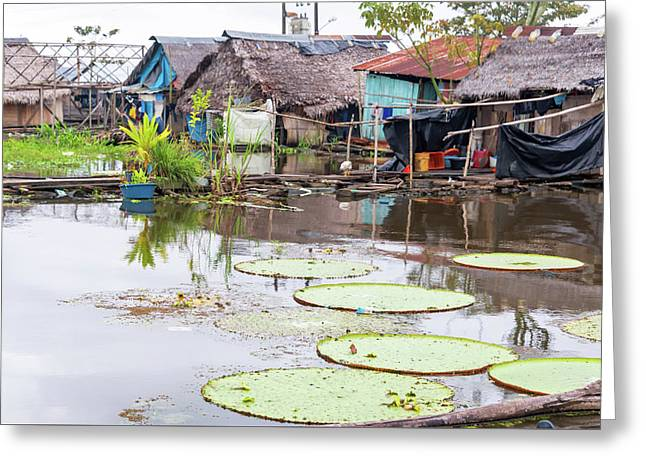Lily Pads In A Slum Greeting Card by Jess Kraft