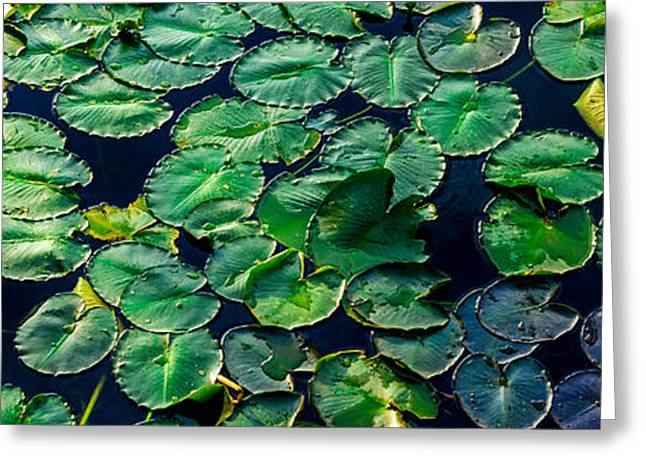 Lily Pads On Blue Greeting Card by Geoff Mckay