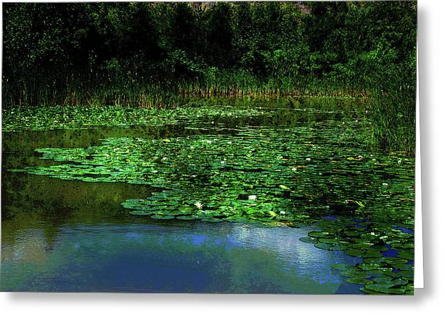Lily Pond Greeting Card by Elaine Manley