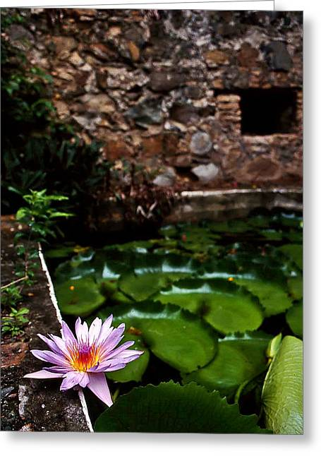 Lily Pond In Ruins. Usvi Greeting Card