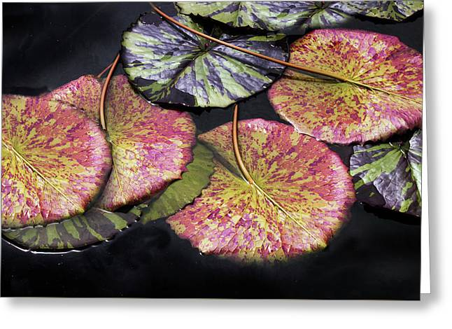 Lily Pond Jewels Afloat Greeting Card by Jessica Jenney