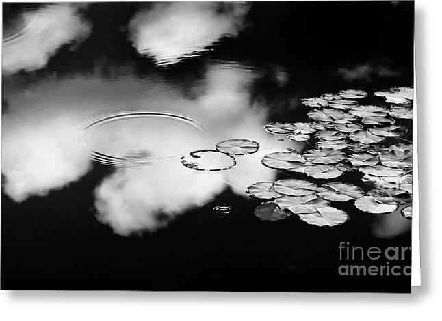 Lily Pond Greeting Card by Tim Gainey