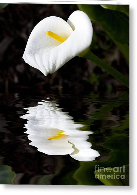 Lily Reflection Greeting Card by Avalon Fine Art Photography