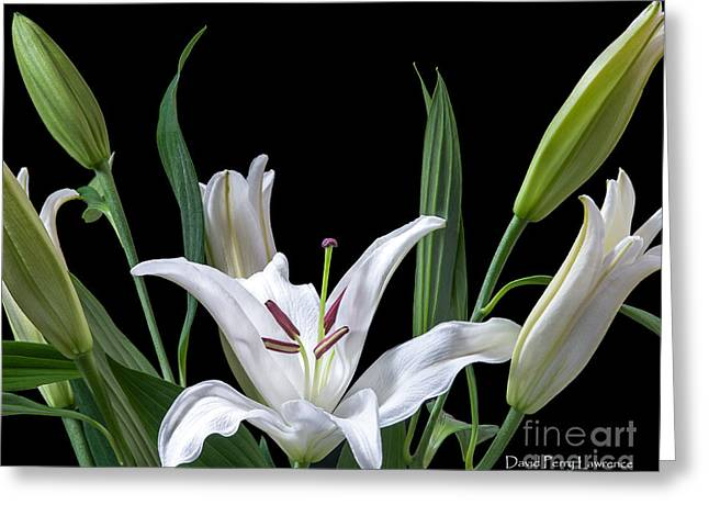 Greeting Card featuring the photograph A White Oriental Lily Surrounded by David Perry Lawrence