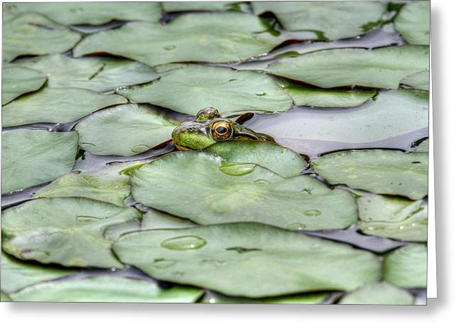 Lily The Frog Greeting Card
