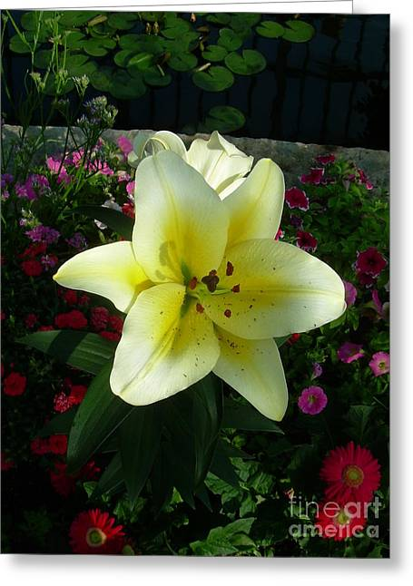 Lily Upon The Pond Greeting Card