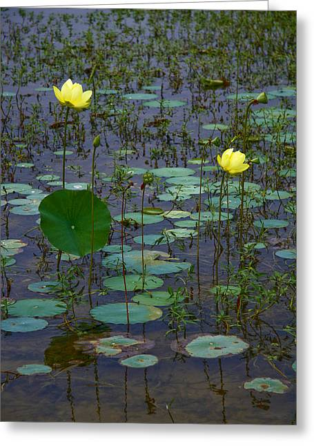 Lily Greeting Card by Wendy Mogul