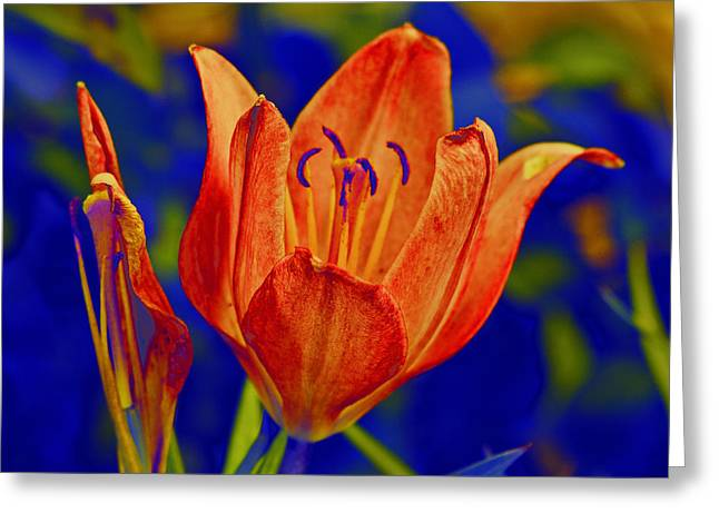 Greeting Card featuring the photograph Lily With Sabattier by Bill Barber