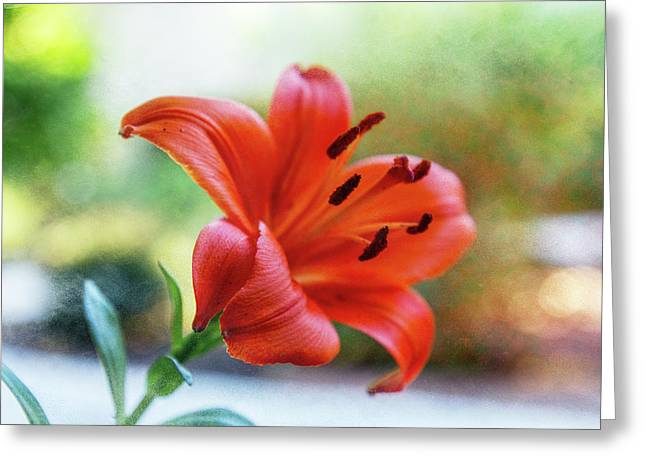 Lily With Sand Greeting Card