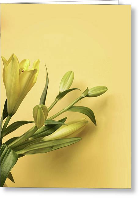 Lily Yellow Greeting Card