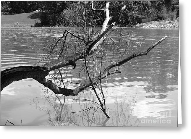 Limb Over Water Greeting Card by Angela Christine