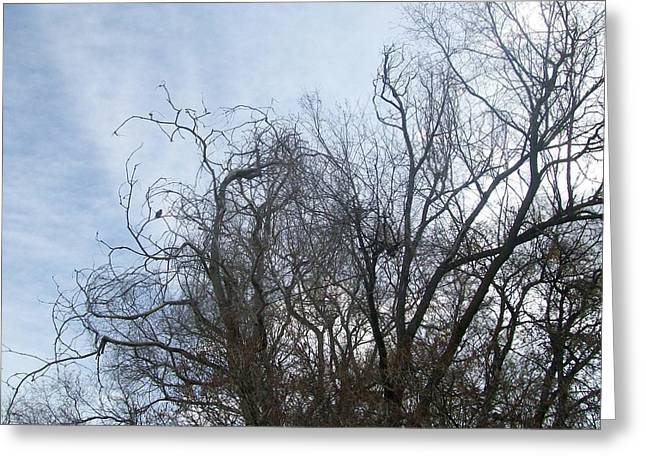Greeting Card featuring the photograph Limbs In Air by Jewel Hengen