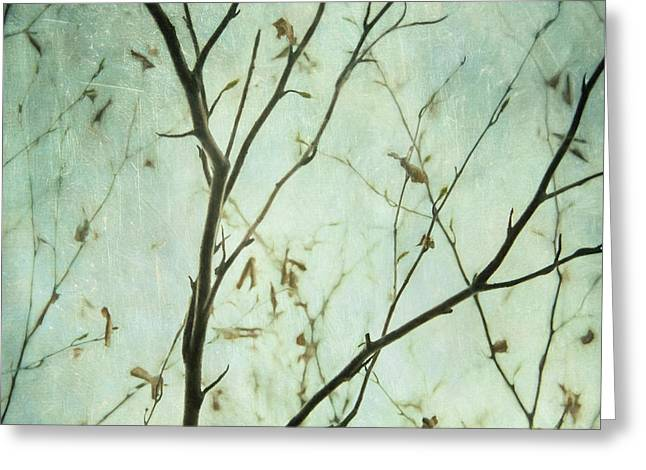 Limbs Of A Tree 5 Greeting Card by Priska Wettstein