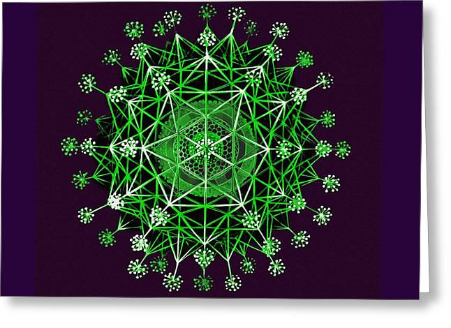 Lime Green Phaeodaria Greeting Card by Diane Addis