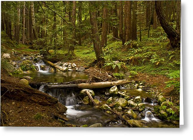 Lime Kiln Creek 1 Greeting Card