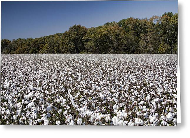 Limestone County Alabama Cotton Crop Greeting Card