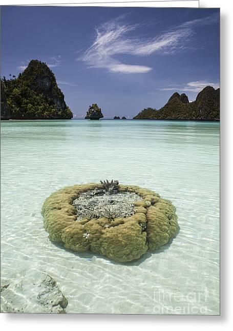 Limestone Islands Surround Corals Greeting Card by Ethan Daniels