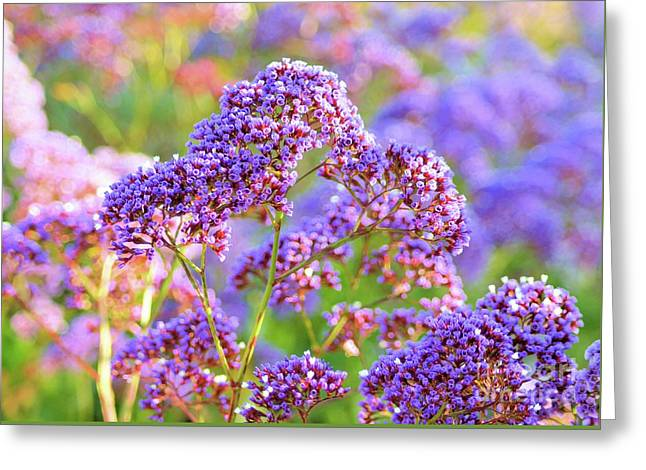 Limonium Greeting Card by Luv Photography