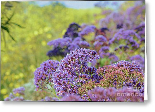 limonium purple Flowers Greeting Card by Luv Photography