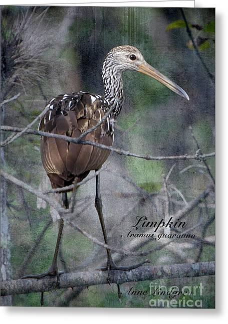 Limpkin Greeting Card by Anne Lindgren