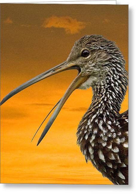 Limpkin At Sunset Greeting Card by Larry Linton