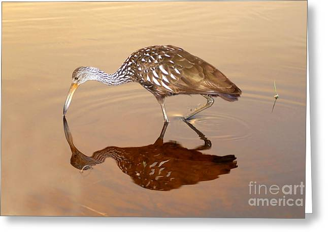Limpkin In The Mirror Greeting Card by David Lee Thompson
