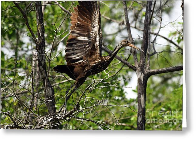 Limpkin Liftoff Greeting Card by William Tasker
