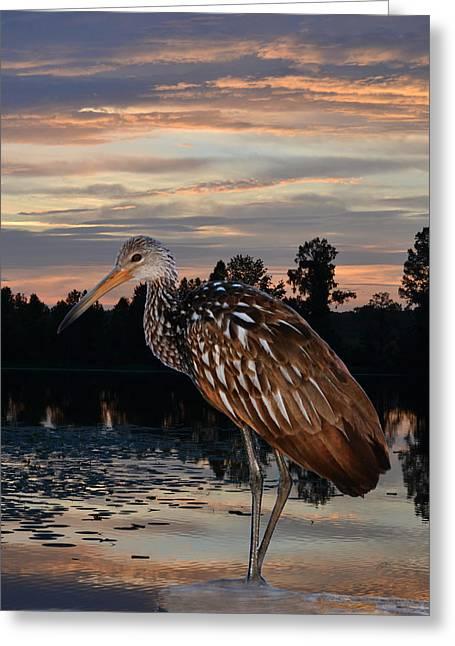 Limpkin - Morning Sunrise Greeting Card