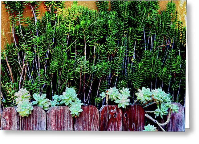 Line Of Succulents And Red Fence Greeting Card