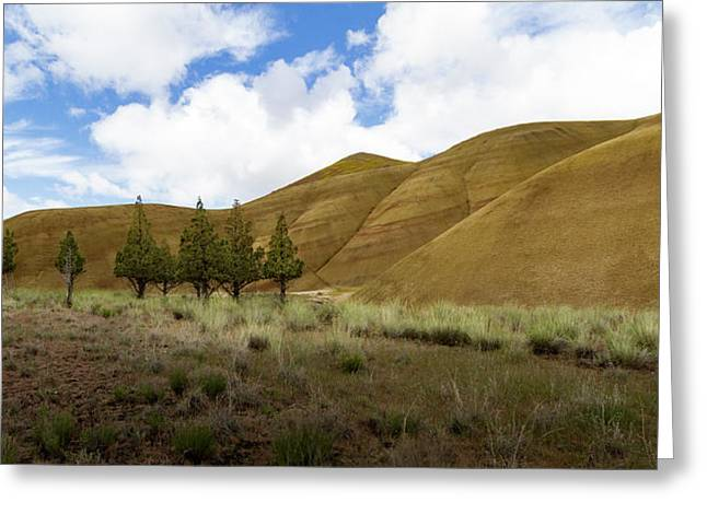 Line Of Trees At Painted Hills Greeting Card by Jean Noren