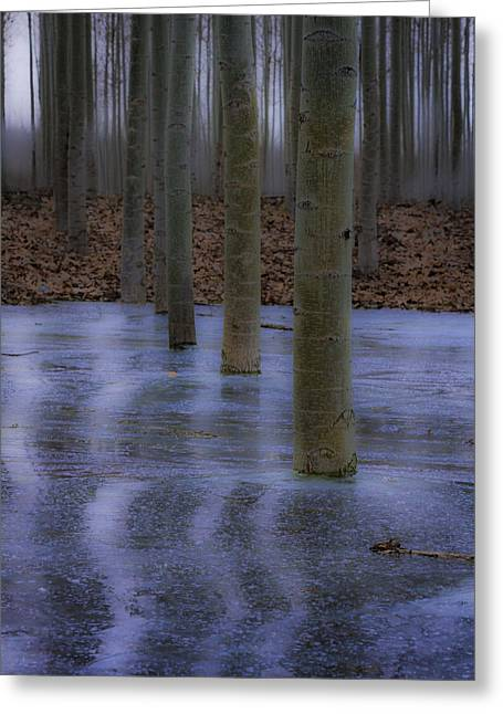 Line Of Trees In Ice Greeting Card by Jean Noren