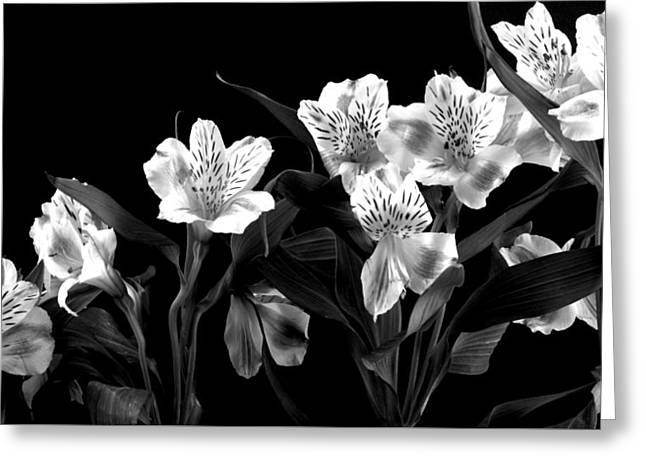 Lined Up Greeting Card by Diane Reed
