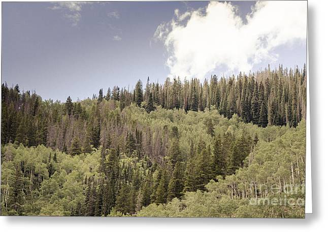 Lines In The Pines Greeting Card by Victoria Lawrence