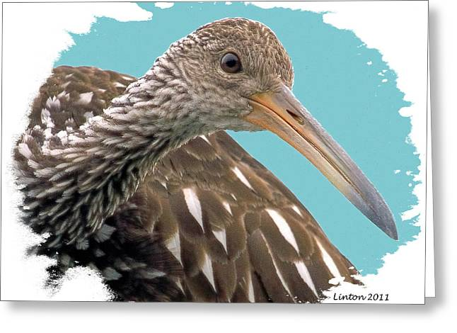 Lingering Limpkin Greeting Card by Larry Linton