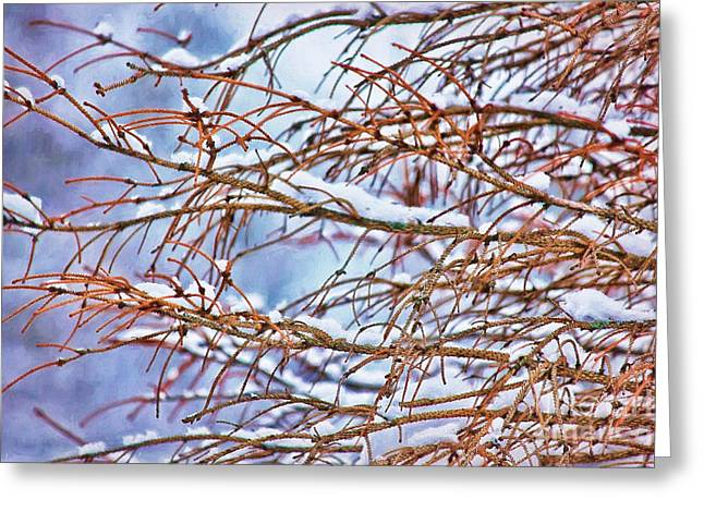 Lingering Winter Snow Greeting Card