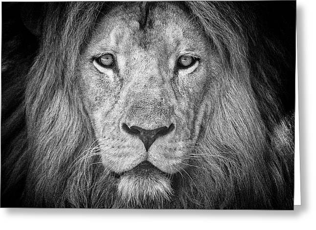 Greeting Card featuring the photograph Lion 5716 by Traven Milovich