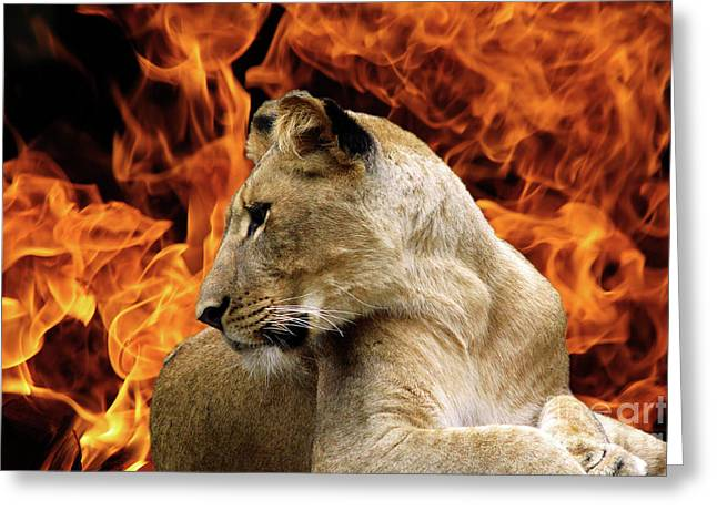 Lion And Fire Greeting Card by Inspirational Photo Creations Audrey Woods