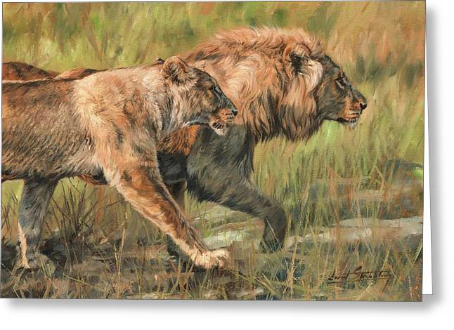 Lion And Lioness Greeting Card by David Stribbling