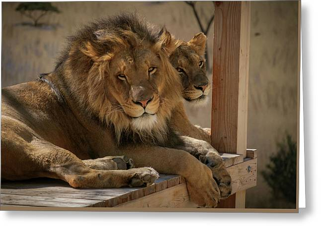 Lion And Lioness Greeting Card by Mary Lee Dereske