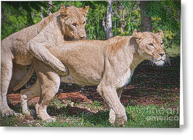 Lion Backer Greeting Card