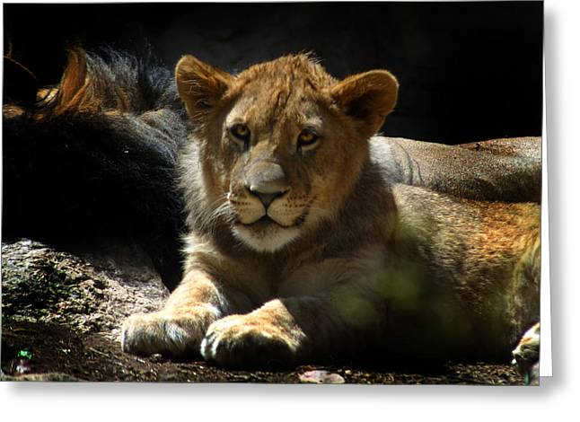 Lion Cub Greeting Card by Anthony Jones
