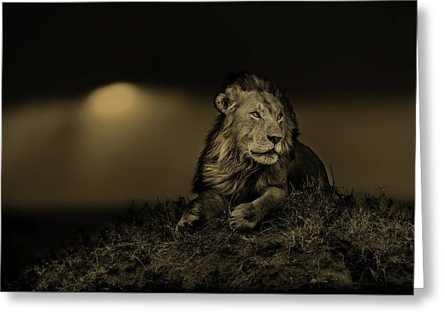 Lion Earless At Sunset In Masai Mara, Kenya Greeting Card by Maggy Meyer