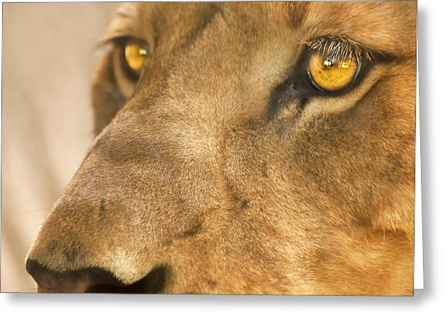 Lion Face Greeting Card by Carolyn Marshall