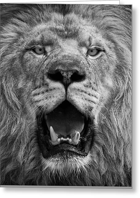 Greeting Card featuring the photograph Lion Face by Ken Barrett