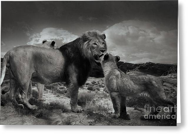 Greeting Card featuring the photograph Lion Family by Christine Sponchia